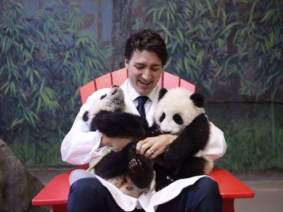 Canada's Prime Minister, Justin Trudeau, welcoming tow new pandas to the Toronto Zoo. Picture from Trudeau's official Twitter.